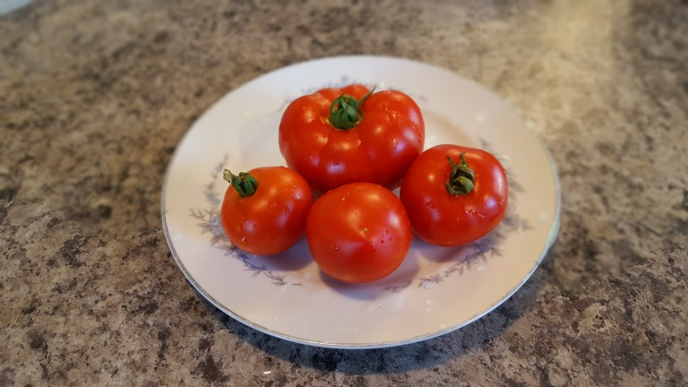 Early Minsk tomato
