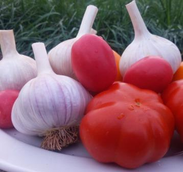 HCF garlic and tomatoes