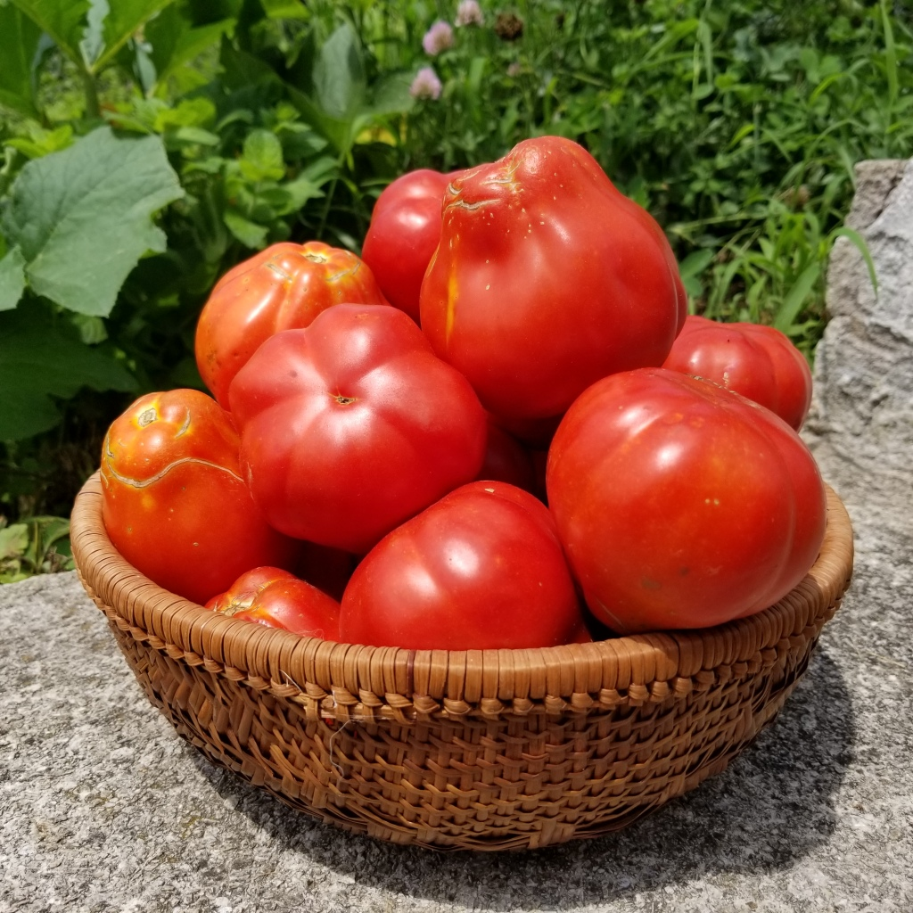 Canestrino Tomato  in basket